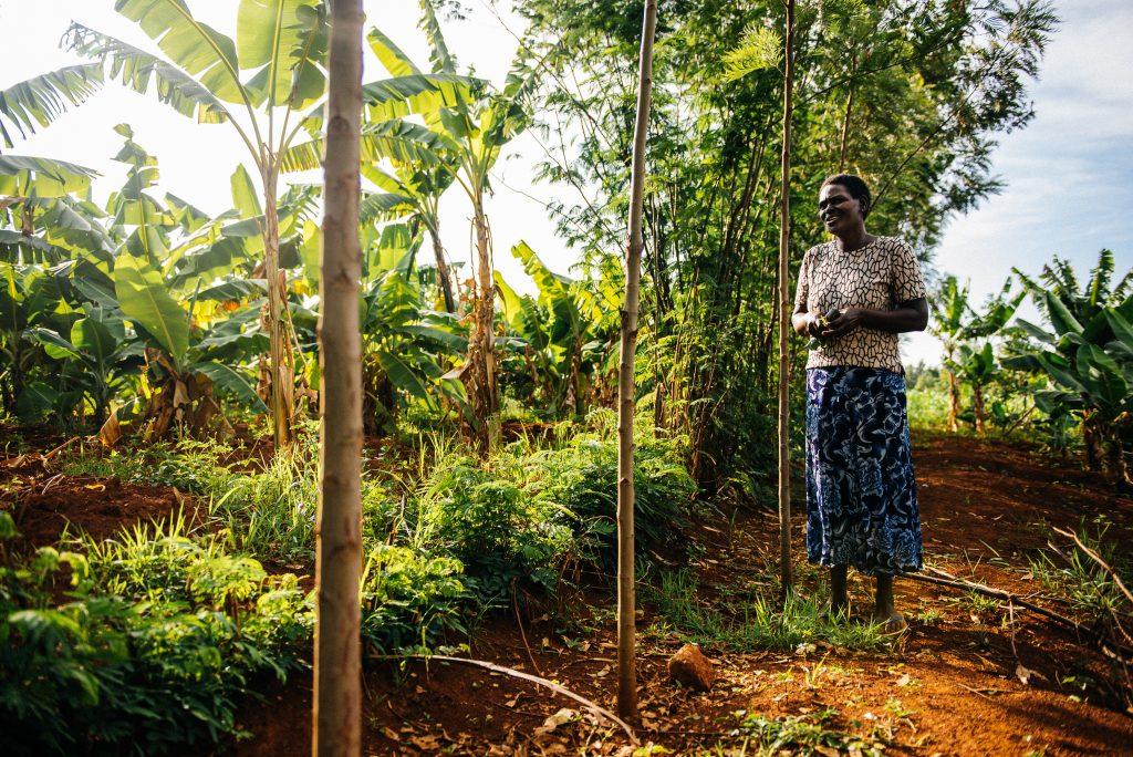 Benta Muga in Kenya is practicing agroforestry on her farm - planting trees together with crops. Photo: Amunga Eshuchi. Vi-skogen.